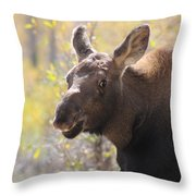 Moose Who Lost His Mother Throw Pillow