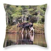 Moose_0586 Throw Pillow