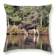Moose_0587 Throw Pillow