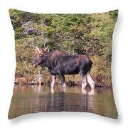 Moose_0591b Throw Pillow