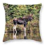 Moose_0609 Throw Pillow