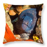Moray And Starfish Throw Pillow