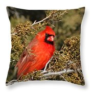 More Than A Red Head Throw Pillow