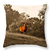 Morning Call Throw Pillow