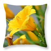Morning Daylilies Throw Pillow