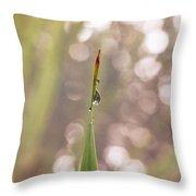 Morning Dew On A Grass Throw Pillow
