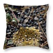 Morning Dew On Autumn Leaf Throw Pillow