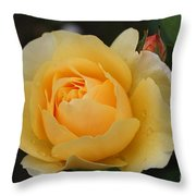 Morning Dew Rose Throw Pillow