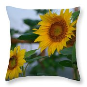 Morning Field Of Sunflowers Throw Pillow