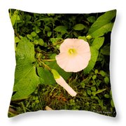 Morning Glory Glow Throw Pillow