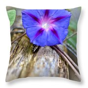 Morning Glory On The Fence Throw Pillow