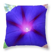 Morning Glory Vine  Throw Pillow