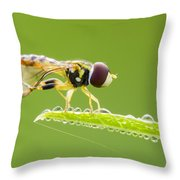 Morning Hoverfly Throw Pillow