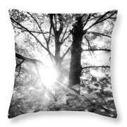 Morning In The Forest Throw Pillow