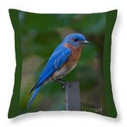 Morning Perch Throw Pillow