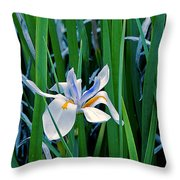 Morning Smile - Wild African Iris Throw Pillow