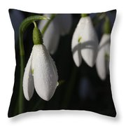 Morning Snowdrops Throw Pillow