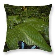 Morpho Butterfly In Rainforest Ecuador Throw Pillow