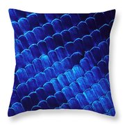 Morpho Butterfly Scales Throw Pillow