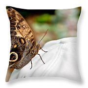 Morphos Butterfly On White Baseball Cap Art Prints Throw Pillow