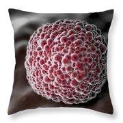 Morula 4-6 Days Throw Pillow