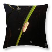Mosquito Eggs In Teh Pantenal Throw Pillow