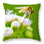 Mosquito  Throw Pillow