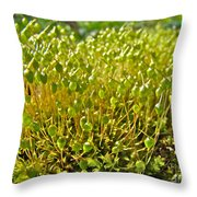 Moss And Fruiting Bodies - Green Lane Pa Throw Pillow
