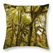 Moss-covered Maple Grove Throw Pillow