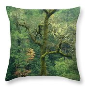 Moss Covered Tree Central California Throw Pillow