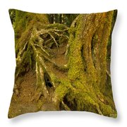 Moss-covered Tree Trunks  Throw Pillow