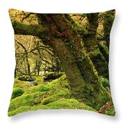 Moss Covered Trees In A Forest Throw Pillow