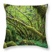 Moss Grows On Vine Maple Trees  Acer Throw Pillow