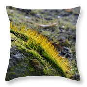 Moss In The Light Throw Pillow