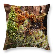 Moss On A Tree Throw Pillow