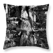Moss On The Evergreens II In Black And White Throw Pillow