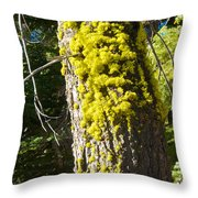 Moss On Tree Along Sentinel Dome Trail In Yosemite Np-ca Throw Pillow