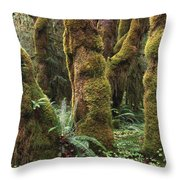 Mossy Big Leaf Maples In Hoh Rainforest Throw Pillow