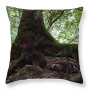 Mossy Roots Throw Pillow