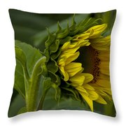 Mostly Open Sunflower Throw Pillow