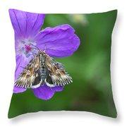 Moth Feeding On Geranium Sanguineum Throw Pillow