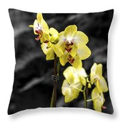 Moth Orchid 2 Throw Pillow