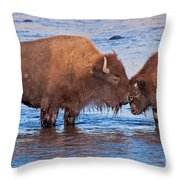 Mother And Calf Bison In The Lamar River In Yellowstone National Park Throw Pillow