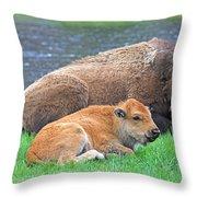 Mother Buffalo And Calf Yellowstone Throw Pillow