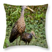 Mother Limpkin And Colt Throw Pillow