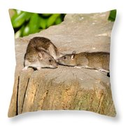 Mother Rat With Youngster Throw Pillow