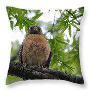 Mother Red Shouldered Hawk Throw Pillow
