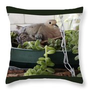 Mother With Baby Mourning Dove Throw Pillow