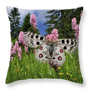 Mountain Apollo On Common Bistort Throw Pillow