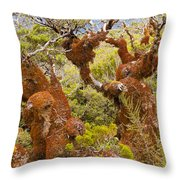 Mountain Beech Rain Forest In Fjordland Np Nz Throw Pillow